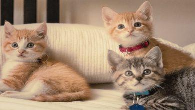 Photo of Kedilerin Bazı Bilinmeyen Özellikleri