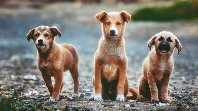 Photo of Sokak Hayvanlarına Yapılacak Ufak İyilikler!