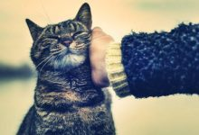 Photo of Evde Kedi Besleyeceklere Tavsiyeler