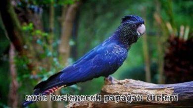 Photo of En Çok Beslenen Papağan Türleri