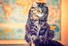 Photo of Kediler Hakkında İlginç Bilgiler