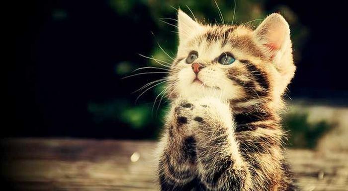 İnsanların En yakın dostu olan kediler hakkında ilginç bilgiler